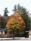 Autumn2006